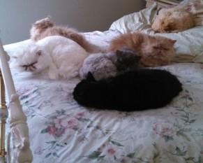 Ebon and Family Asleep