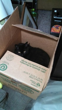 Jax box